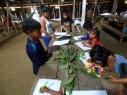 Proyecto Etnobotánica 5